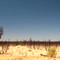 Landscape(31of 38)